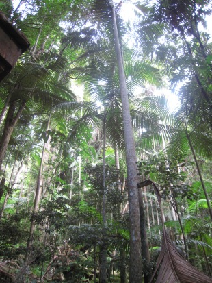 More Wollumbin forest