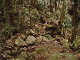 Original photo of Wollumbin rainforest