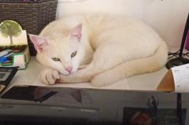 Creative Cat Muse - Sweetie sleeps behind my computer.