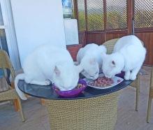 Jezebel, Sweetie & Tinkerbell