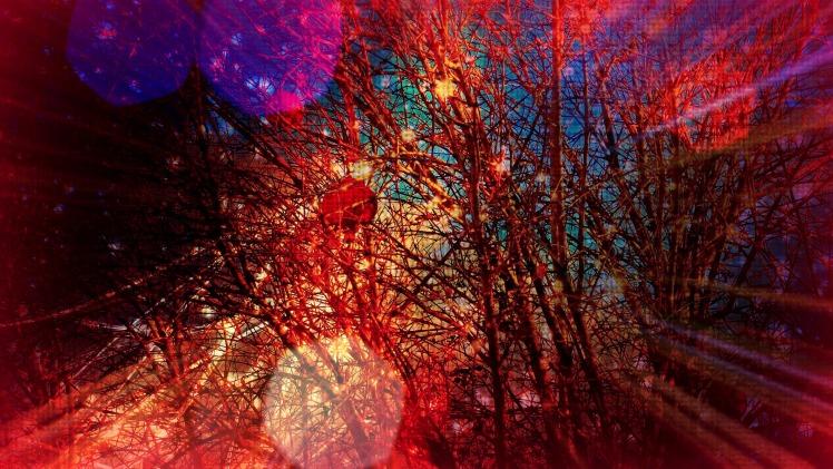 Pomegranate Passion