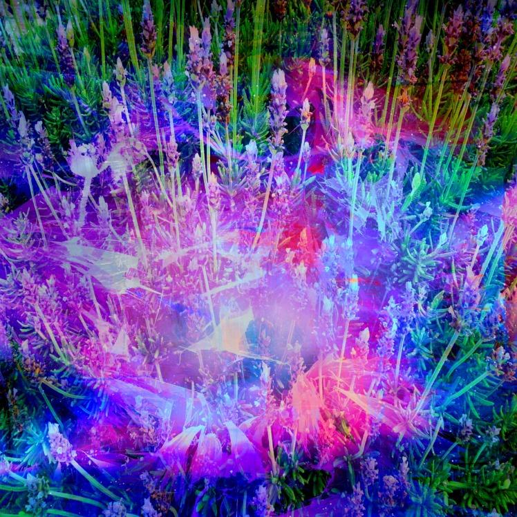 Spirit of Lavender