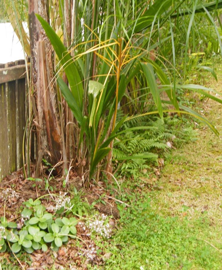 Ferns & palms, front garden