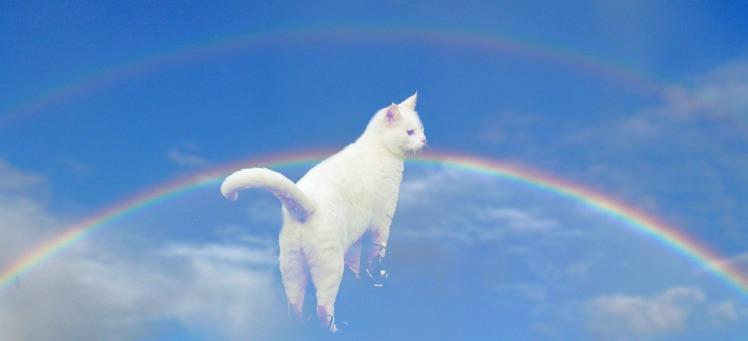 Jezebel & Rainbow