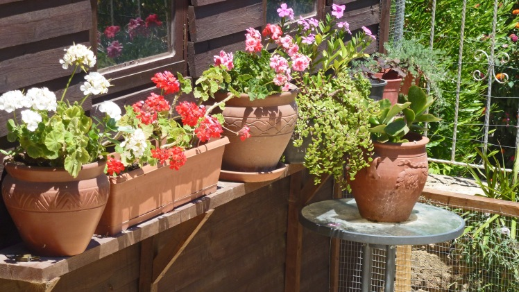 Potted plants, summer 2013