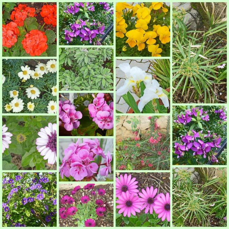 Spring Flowers in North Cyprus