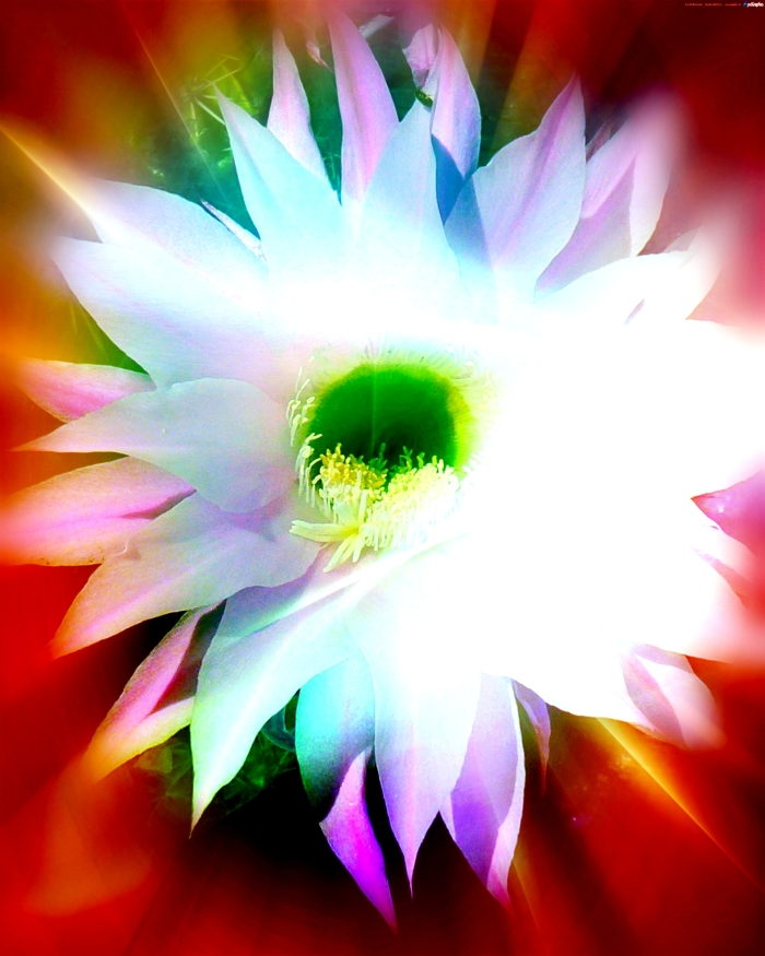 The Heart of Lightness