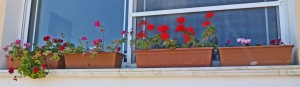 Flower boxes, front window