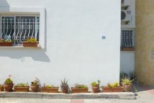 Garden, car park
