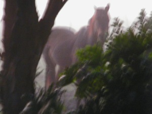 Horse in early morning mist 1