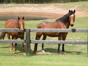 Horses at Ned's Bed dam