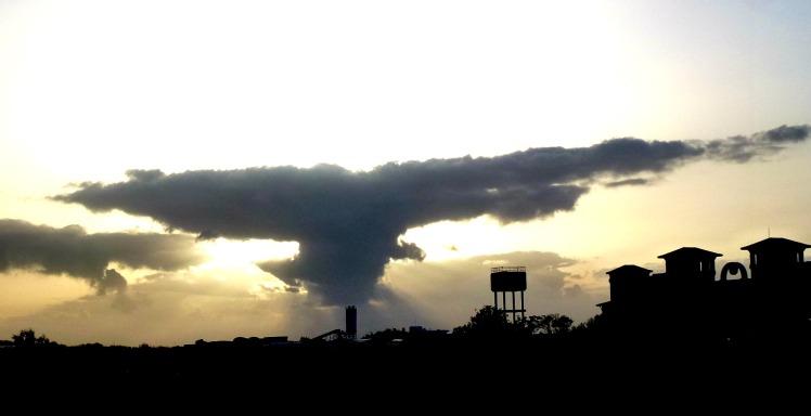 Bird in a cloud 1
