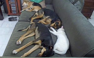 Mutts on Sofa 1