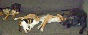 Mutts on sofa 3
