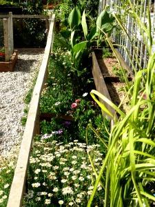 Flower bed 1, July 2014