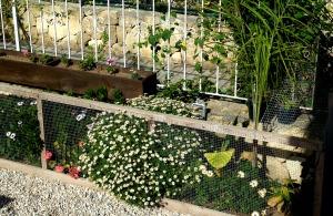 Flower bed, July 2014