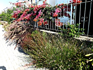 Front flower bed, July 2014