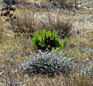 Green bush, paddock
