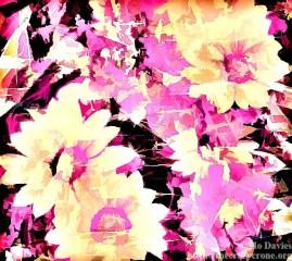 Autrum Rose 1