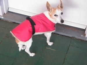 Rosie in winter coat
