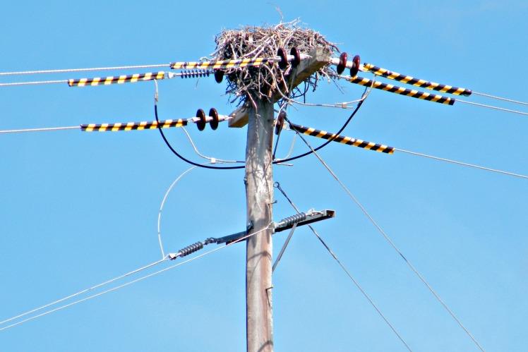 Sea-eagle nest, close-up