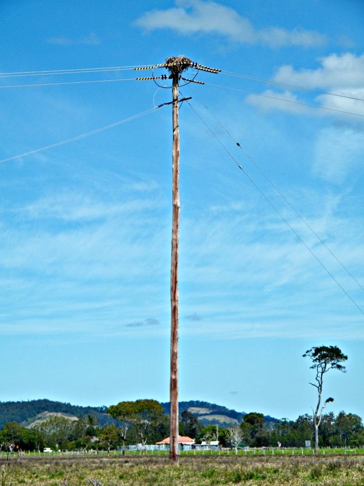 Sea-eagle nest