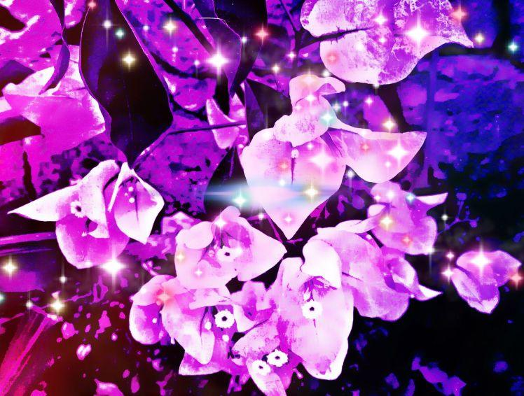 Bougainvillea Sparkles
