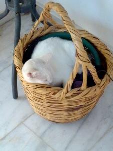 Sweetie in basket