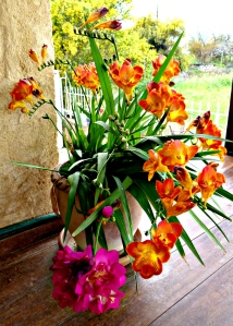 Freesias, mixed 1