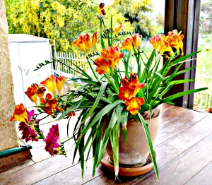 Freesias, mixed 2