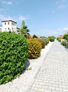 2015 Spirng Garden - communal garden