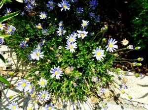 2015 Spring Garden 3