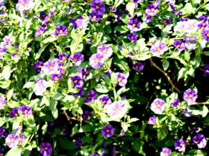 2015 Spring Garden 4