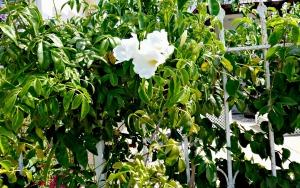 2015 Spring Garden 8