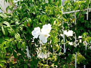 2015 Spring Garden 9
