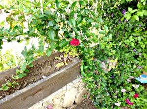2015 Spring garden