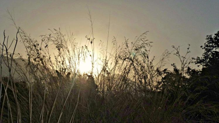 Sun & Grasses