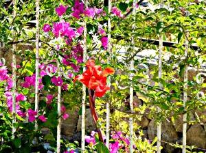 Summer garden, 2015 2