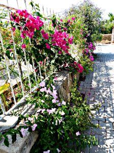 Summer garden, 2015 3