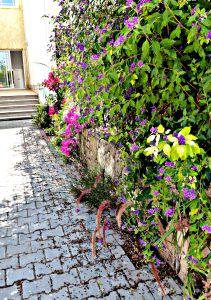 Summer garden, 2015 4