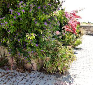 Summer garden, 2015 5