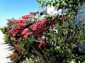 Summer garden, 2015 6