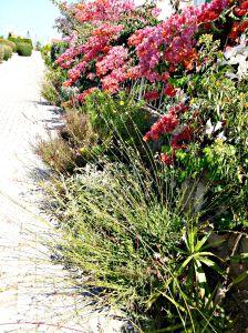 Summer garden, 2015 7