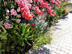 Summer garden, 2015 8