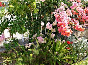 Summer garden, 2015 9