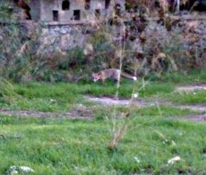Foxy fun 1