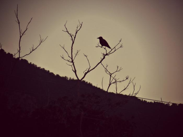 Crow - single