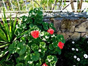 Spring 2016 - Red geranium