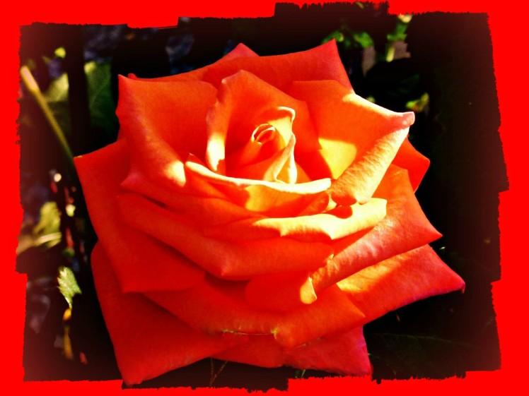 Orange Aglow