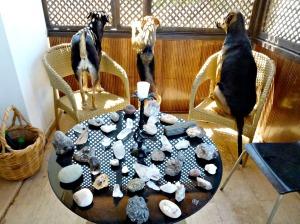 Sanctuary Table, verandah, round